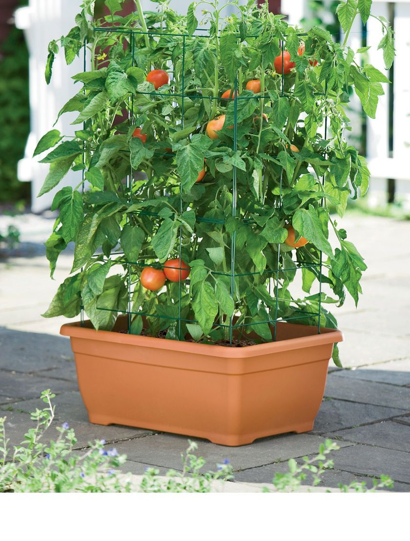 indoor tomato garden. Our Tomato Success Kit Is Garden-tested And Guaranteed. The Most Convenient, Foolproof Way To Grow Your Own Delicious Tomatoes! Self-watering Provide A Indoor Garden T