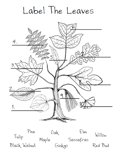 leaf worksheet   just to show the different shapes