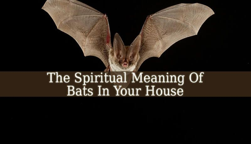 The Spiritual Meaning Of Bats In Your House Can Be Good Or Less