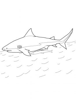 Bull Shark Coloring Page Super Coloring Bull Shark Shark Coloring Pages Shark Painting