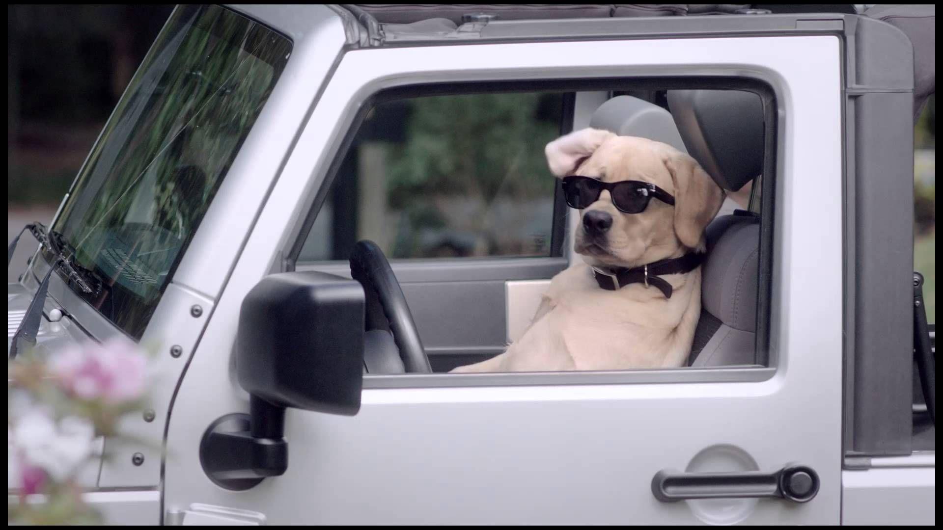 Bro Dog Commercial Veterinary Pet Insurance Sick pets