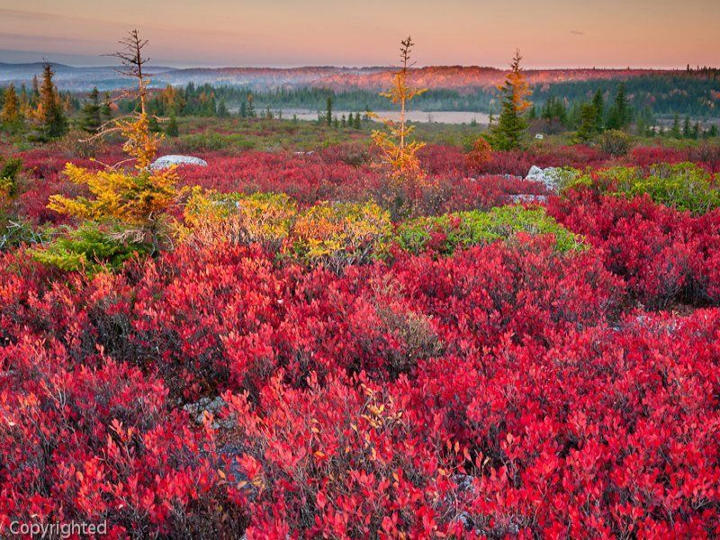 Dolly Sods, WV.  Beautiful colors!
