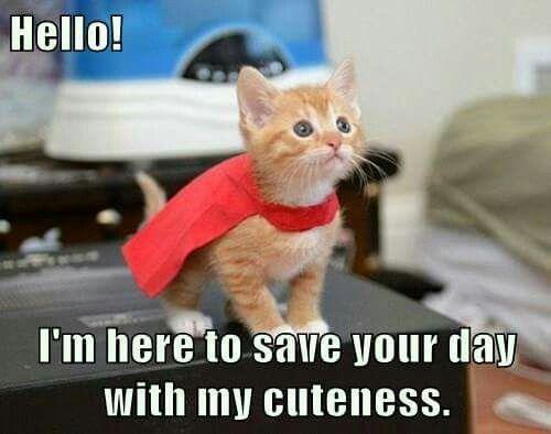 Super Funny Memes: You Did It, Super Cat!