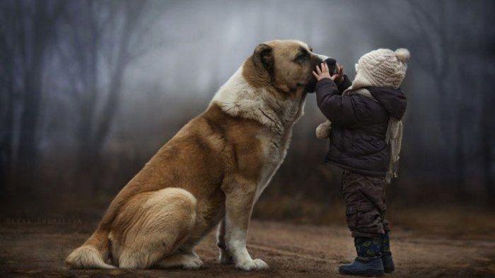 Nádherné fotografie. Matka fotí svoje deti so zvieratami
