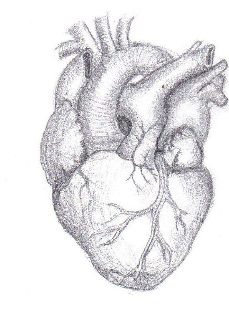 17 Best Ideas About Real Heart Tattoos On Pinterest Anatomical At Muscles Real Heart Drawings W Dibujo De Corazon Humano Dibujos De Corazones Dibujos Hipster