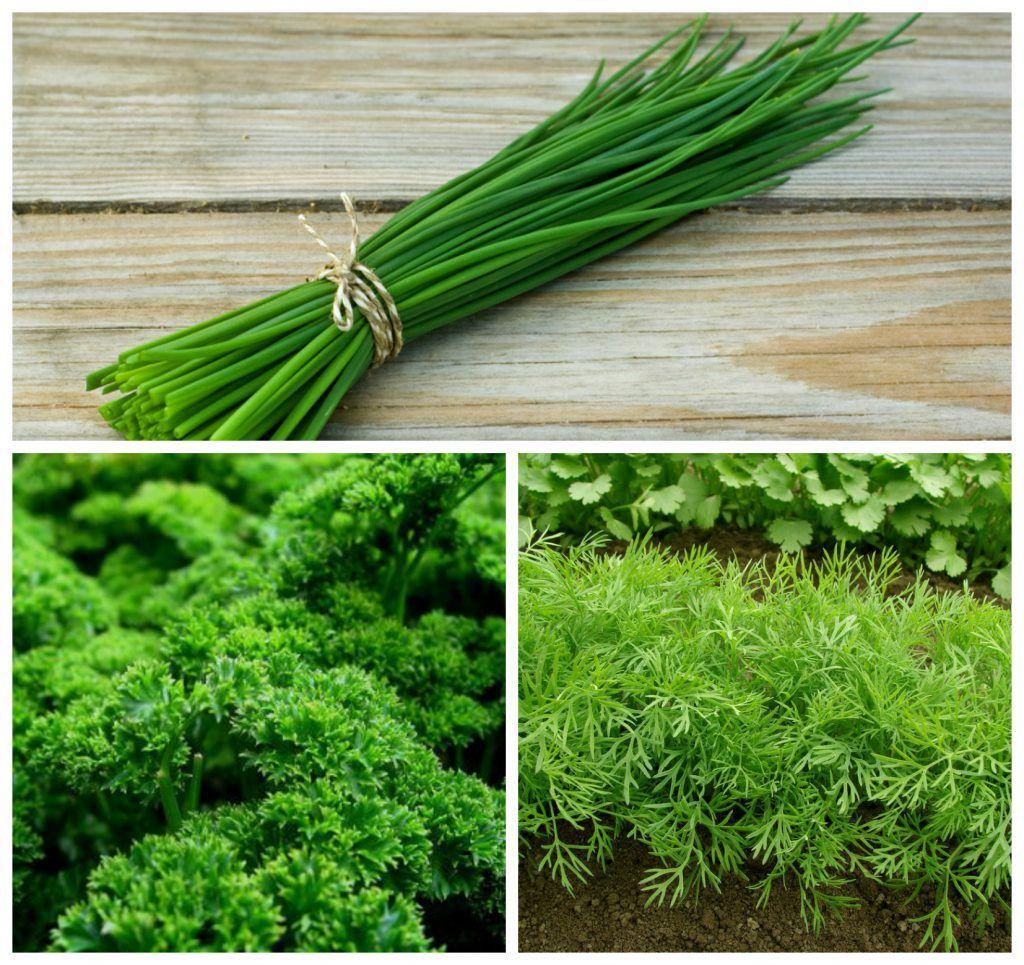En octobre, je m'occupe de mon jardin | Plantes aromatiques, Herbes aromatiques, Que planter en ...
