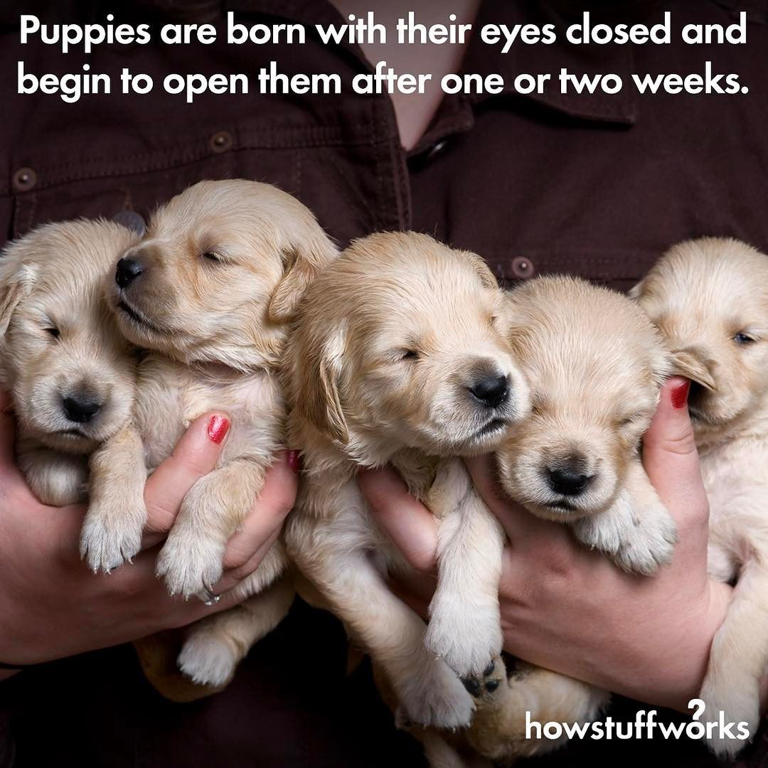 March 23 Is National Puppy Day Puppy Day National Puppy Day Puppies