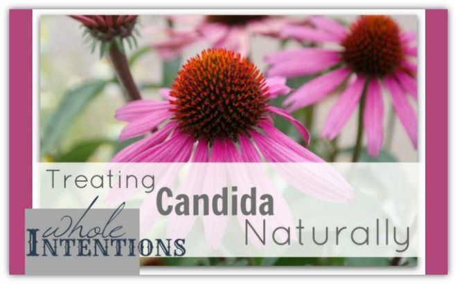 If you've spent any time attempting to get rid of candida, you've probably been just as disappointed as I was when I realized how difficult it is, and that many of the 'quick fixes' we were told would help, didn't. Unfortunately treating candida isn't easy and, more often than not, it becomes a recurring issue. …