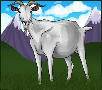 how to draw a billy goat