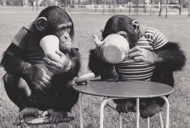38 Chimps Tea Party ideas