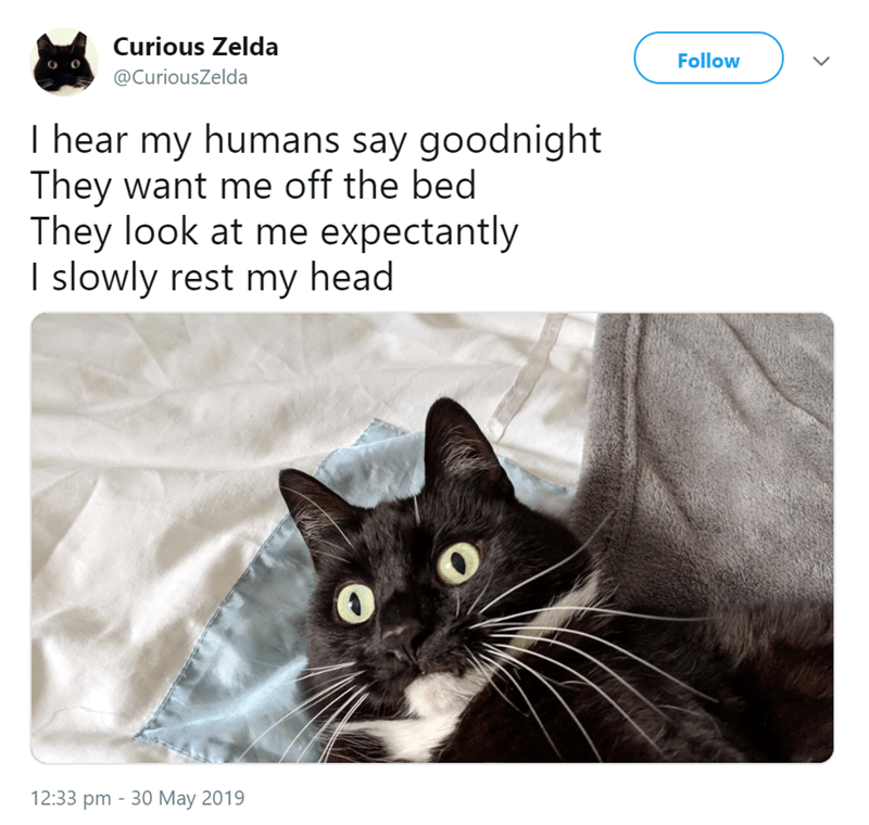 Curious Zelda Tweets Funny Limericks From Her Daily Life