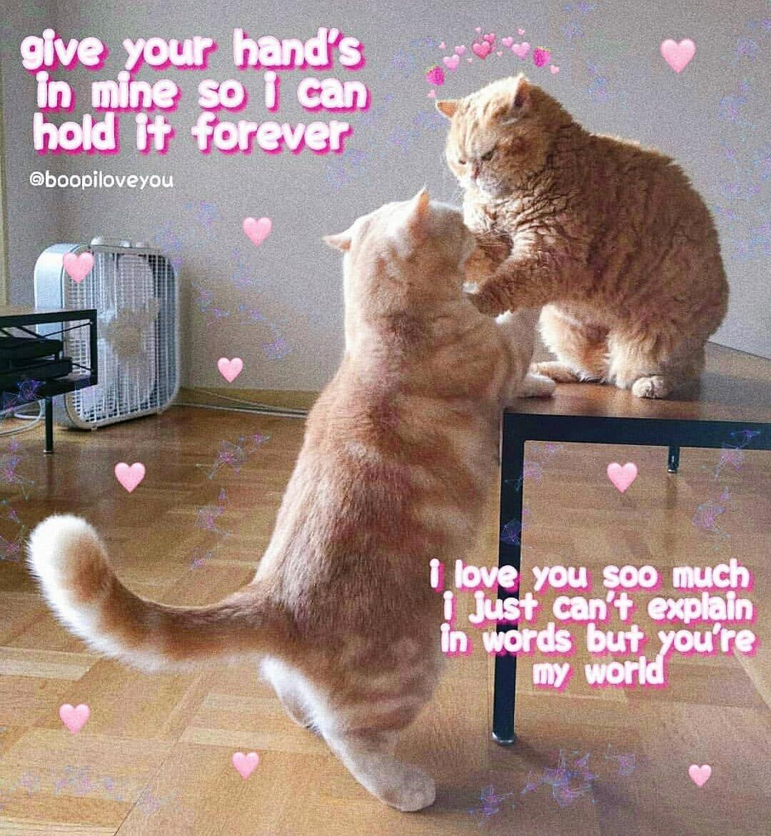 T Boopiloveyou Cute Love Memes Cute Cat Memes Funny Video Memes