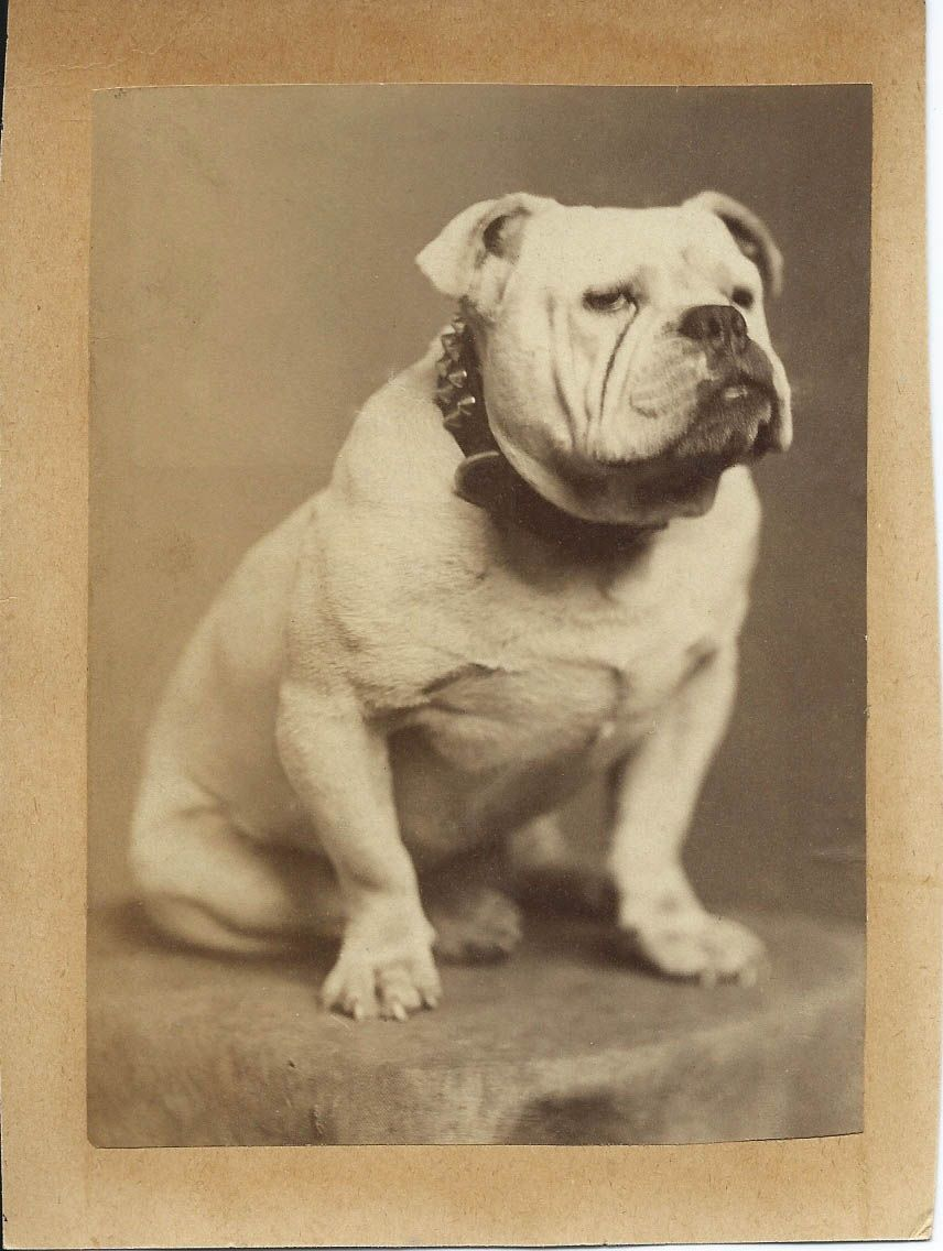 Pin On Antique Dog Photos From Bendale Collection