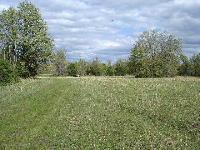 78 Acres with county road frontage. Approximately ½ wooded ½ open with nice pond, some marketable timber. Excellent deer and turkey hunting. Good building sites in Alton MO