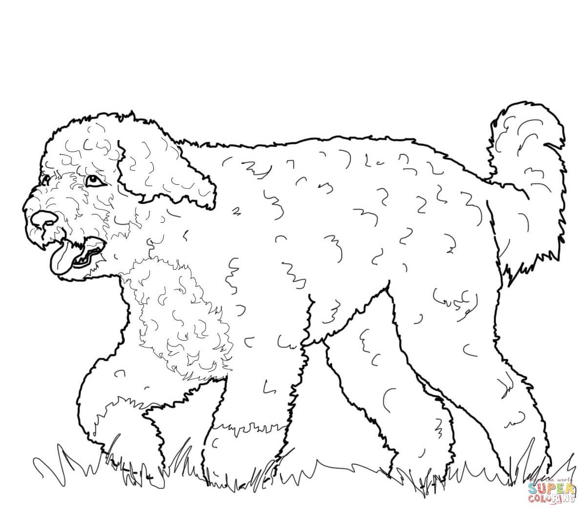 Portuguese Water Dog Dog Coloring Page Dog Coloring Book Coloring Pages [ 1054 x 1200 Pixel ]