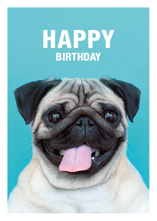 7abee111544f94f79d91633433edc119 happy birthday pug greeting card available at etsy com shop