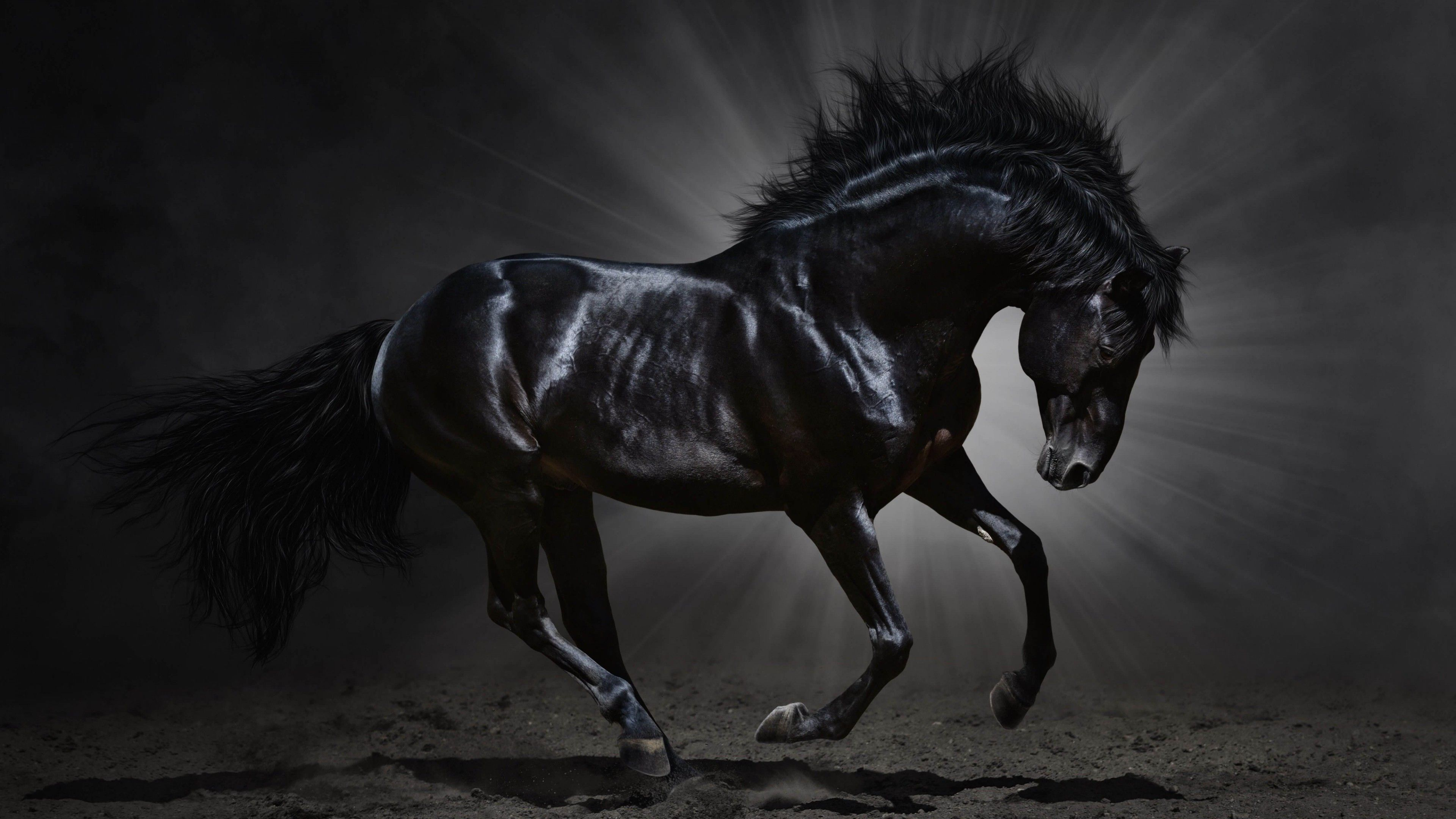 Black Horse Desktop Wallpaper Download Dark Horse Hd Wallpaper For 4k 3840 X 2160 Hdwallpapers Net Horses Horse Wallpaper Horse Pictures