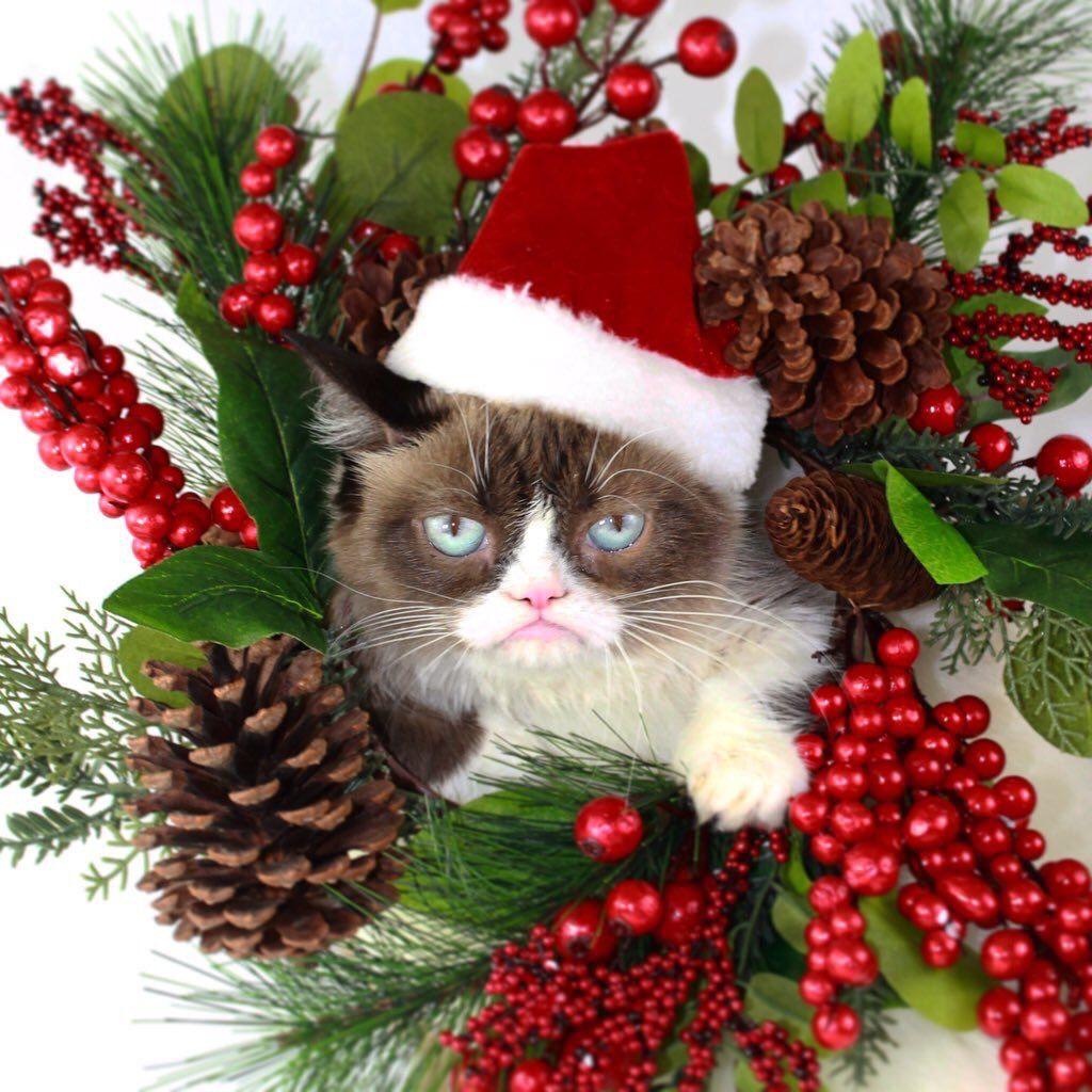 Merry Christmas Cat Meme