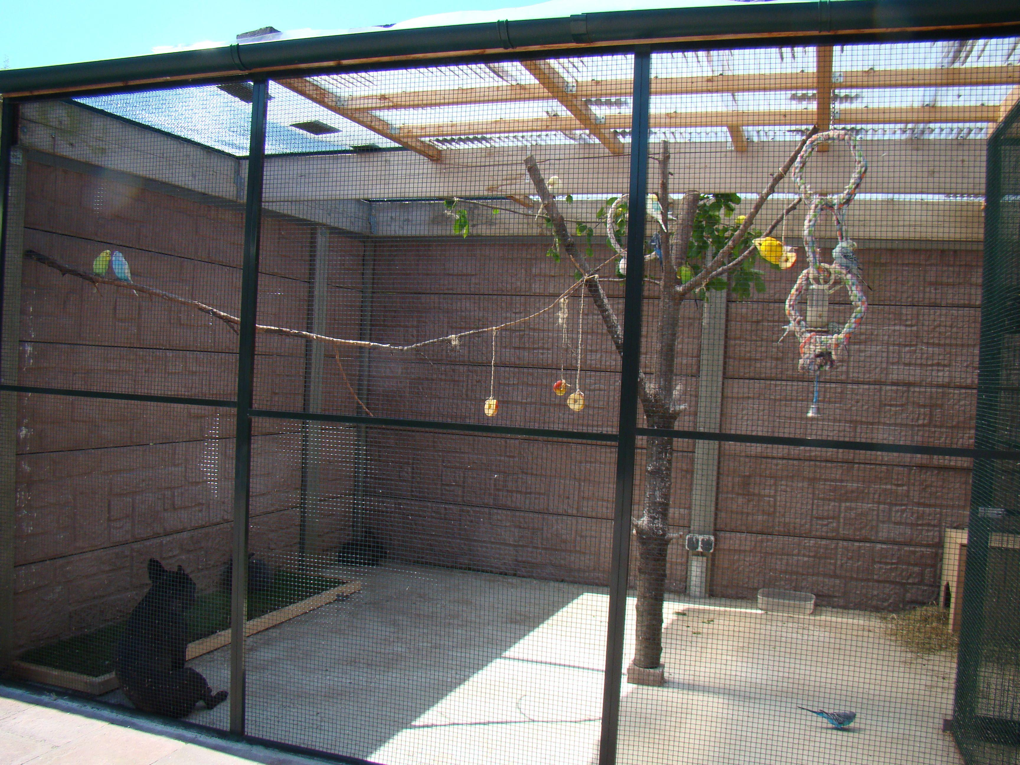 Aviary | Building Bird Aviaries | Pinterest | Bird aviary, Bird and ...