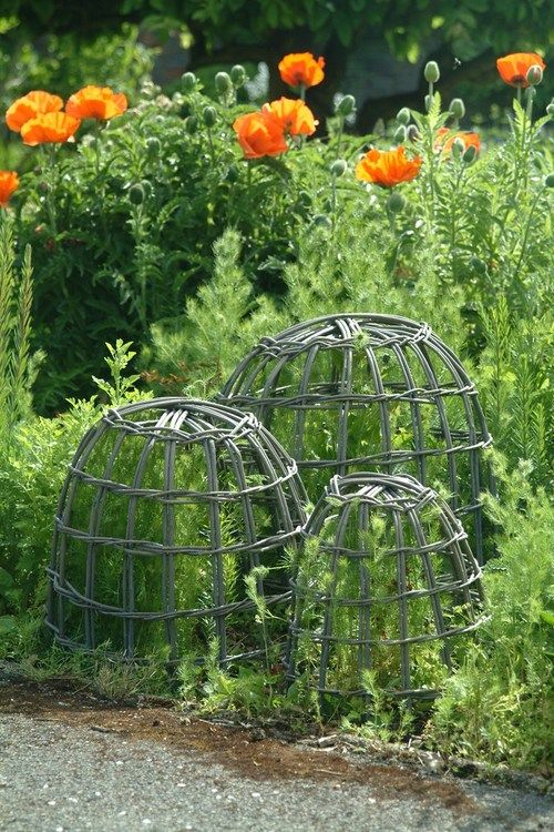 Protecting Garden From Animals Part - 33: Willow Garden Cloches. Protect Plants From Animals, And/or Provide Support  To Plants