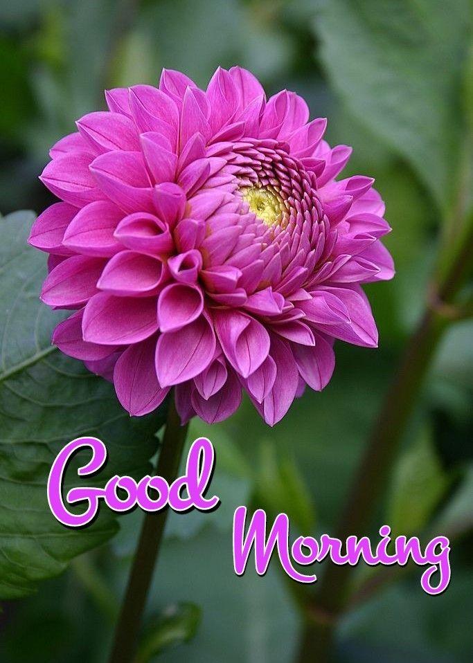 Pin On Beautiful Morning