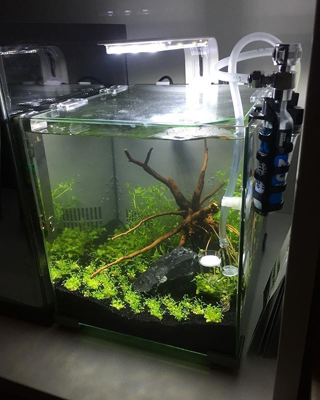 Newly planted tank set up the top fin retreat tank that i for Petsmart betta fish tanks