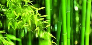 Windlicht Peacefully Bamboo Fototapete Bambus Tapete Bambus