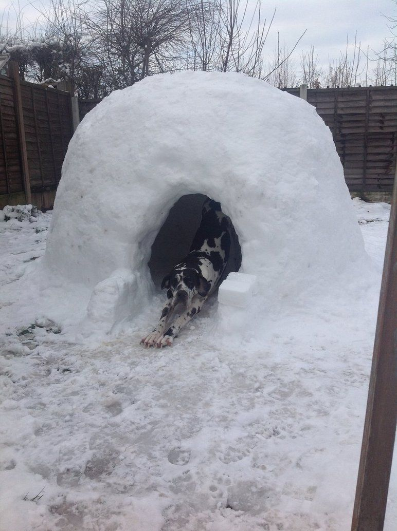 igloo dog house mybktouch inside igloo dog house igloo dog house