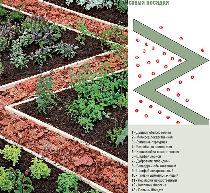 перечень зелень для посадки на огороде фото добавьте