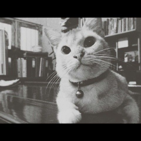 Cat pose #cat #pet #animal #blackandwhite #vsco #pictoftheday