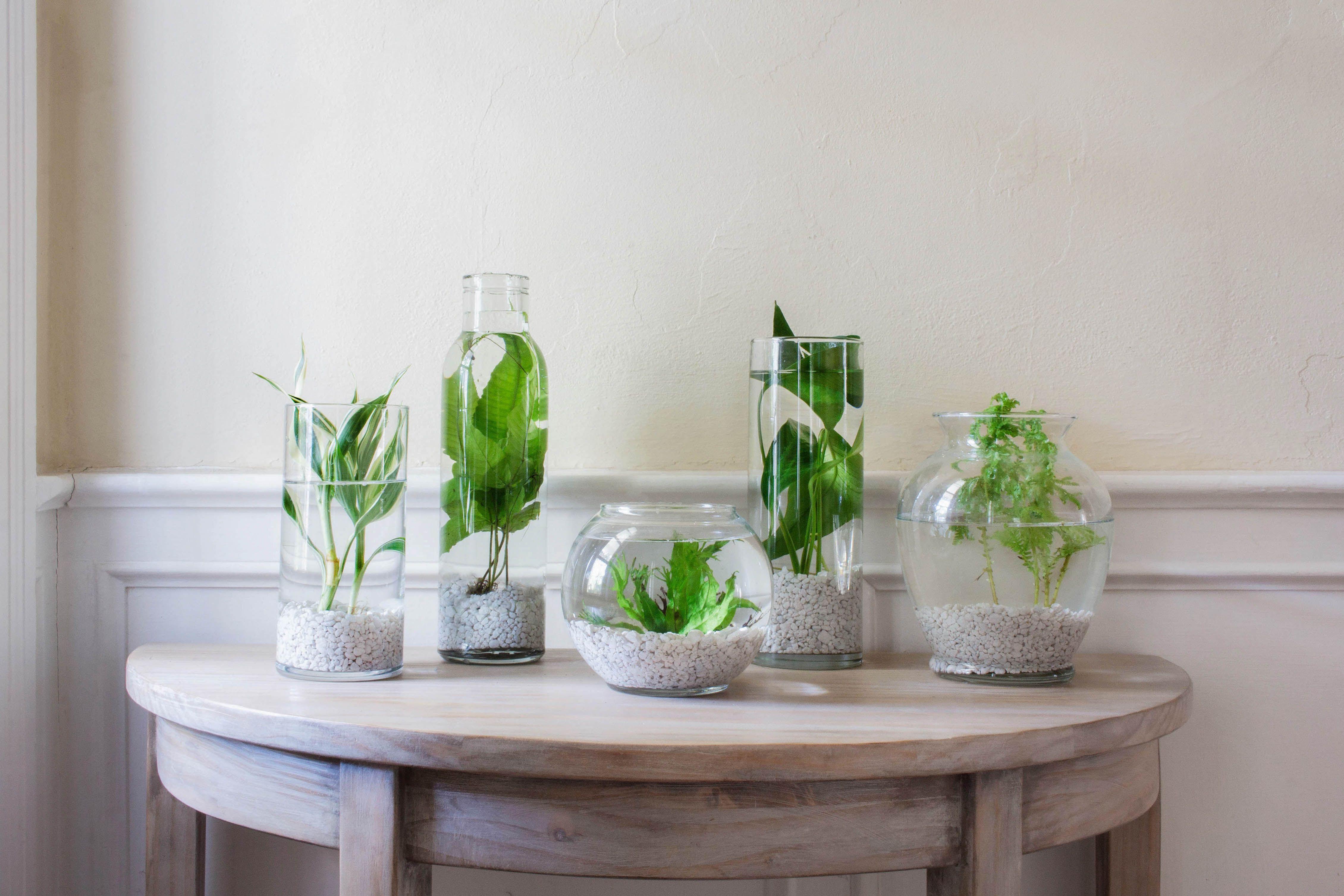Indoor Water Garden Plants And Ideas To Get You Started Hunker Indoor Water Garden Water Garden Plants Indoor Water Features