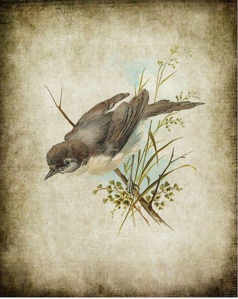 расчесывать старые картинки птиц платье может быть