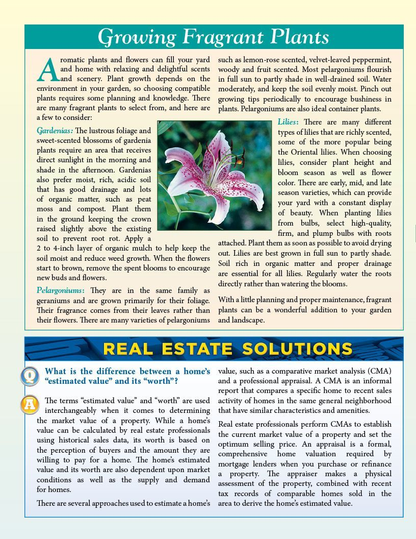 Page Realtor Newsletters HalfFold Real Estate Newsletter
