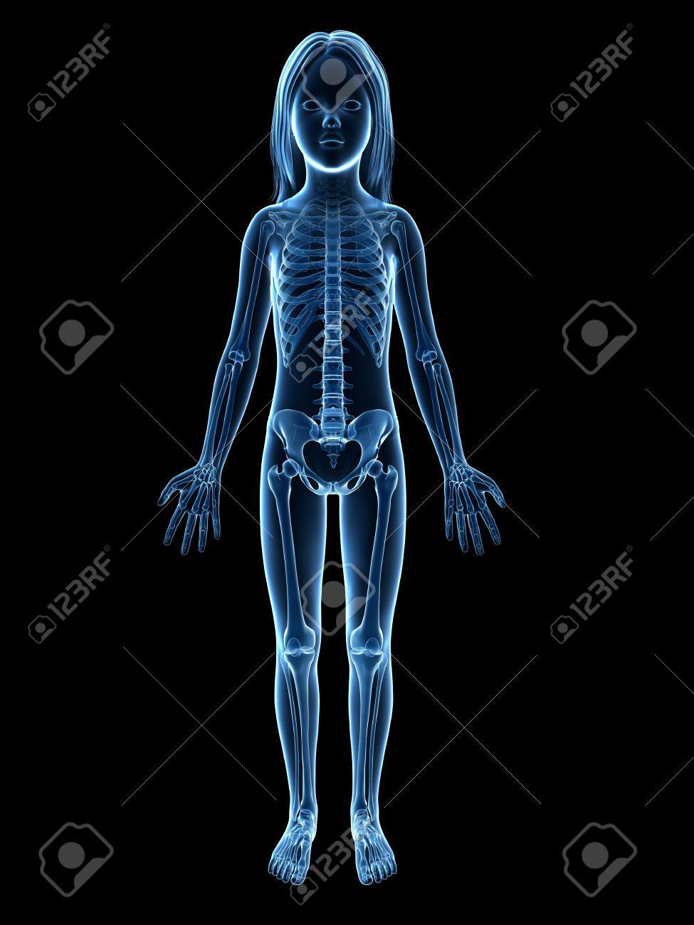 Anatomía De Una Joven - Esqueleto Fotos, Retratos, Imágenes Y ...