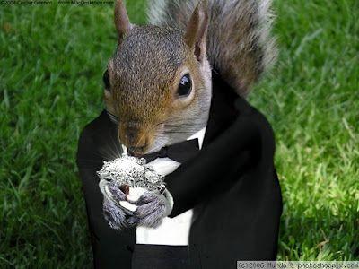 Squirell Ring Bearer We Ll Take It Animal Jokes Squirrel Cute Animals