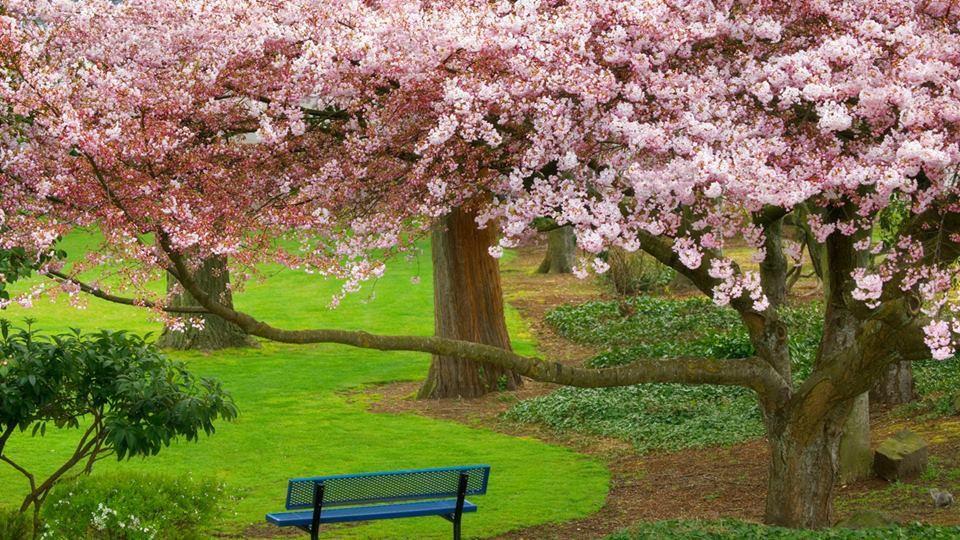 Filipe Moura On Twitter Landscape Trees Evergreen Park Nature Desktop Wallpaper