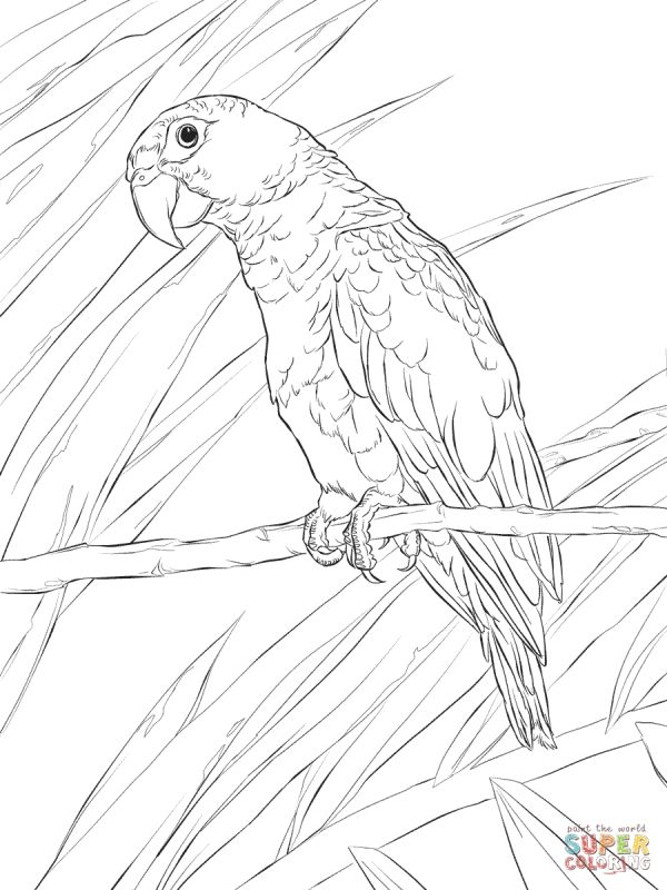 Realistic Puerto Rican Parrot detailed coloring pages for adults - new eagles to coloring pages