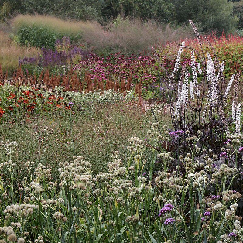 Pensthorpe associations de plantes jardins de vivaces jardins et jardin facile - Jardin facile ...