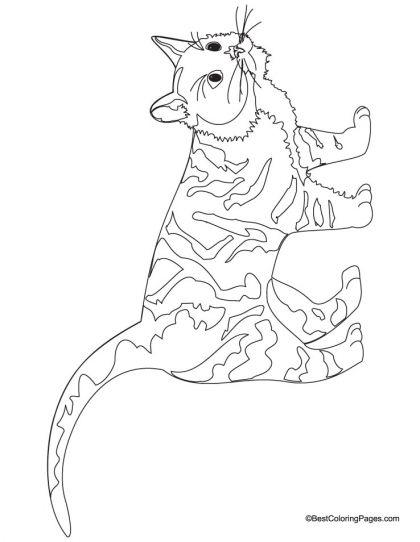 Pin Von Midna Of The Twilight Auf Domestic Animals Coloring Pages Illustration Katze Ausmalbilder Zeichnungen
