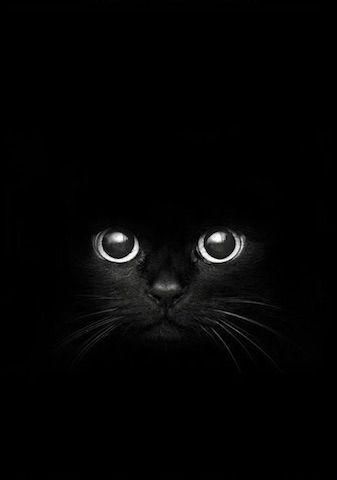 Lancer Un Regard Noir Chat Noir Animaux Fond D Ecran Chat Illustration De Chat Chat Noir