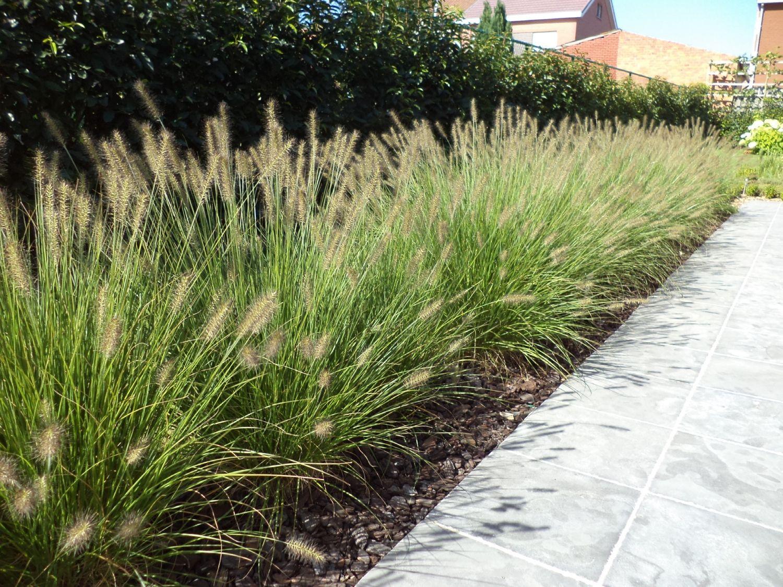 Pennisetum alopecuroides 39 hameln 39 lampepoetsersgras for Pinterest jardin terrasse