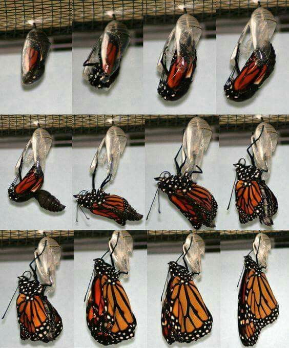 Pin By Linda Shanes On Butterflies