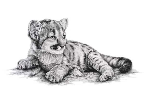 So Cute Mountain Lion Cub Watercolor Realistic
