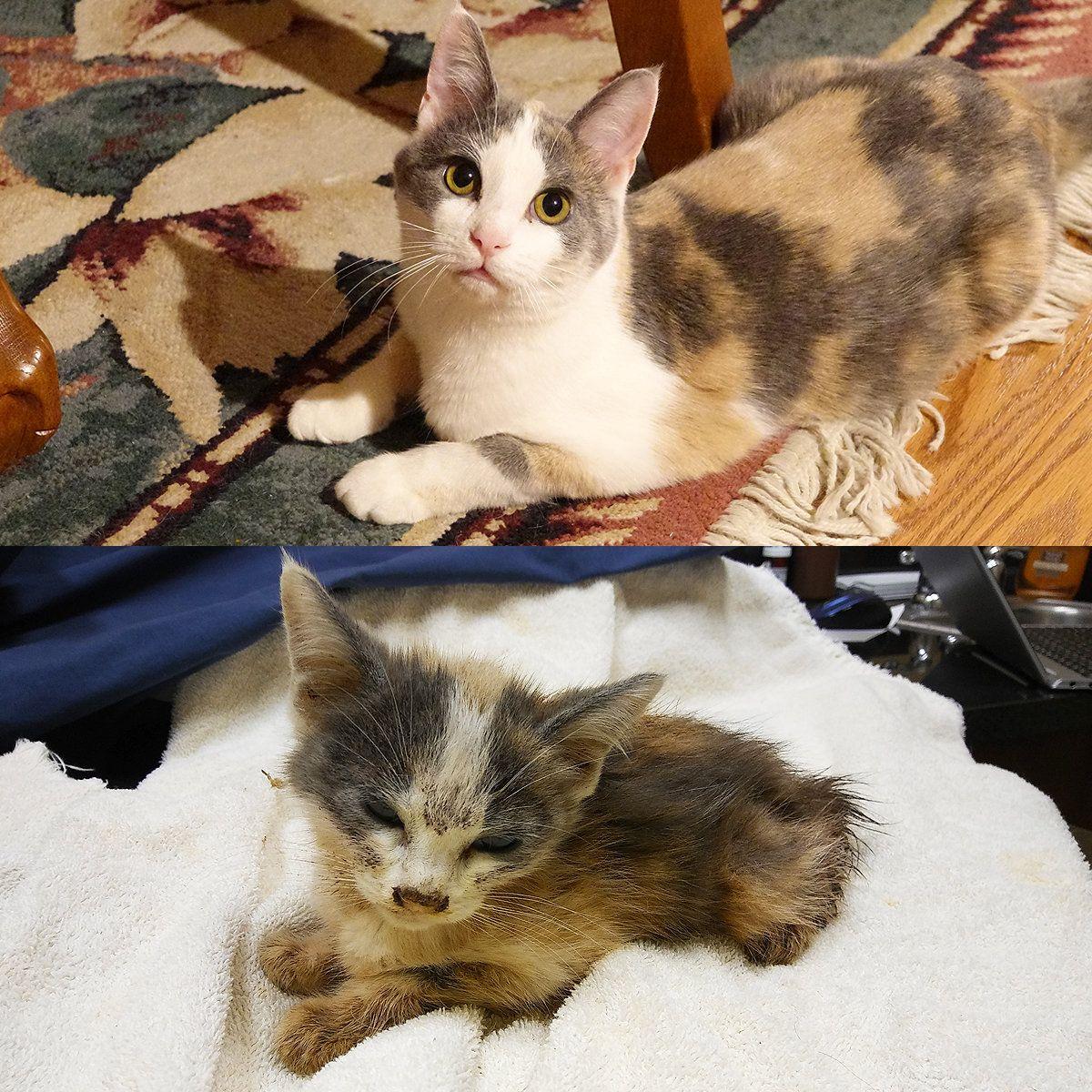 E Mail Nelleke Talen Outlook Kitten Kitten Rescue Cat Rescue