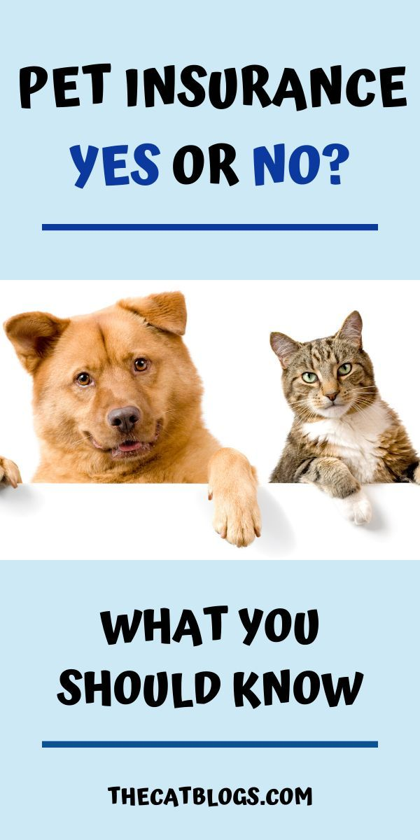Pet Insurance Yes or No? in 2020 Pet insurance, Pets