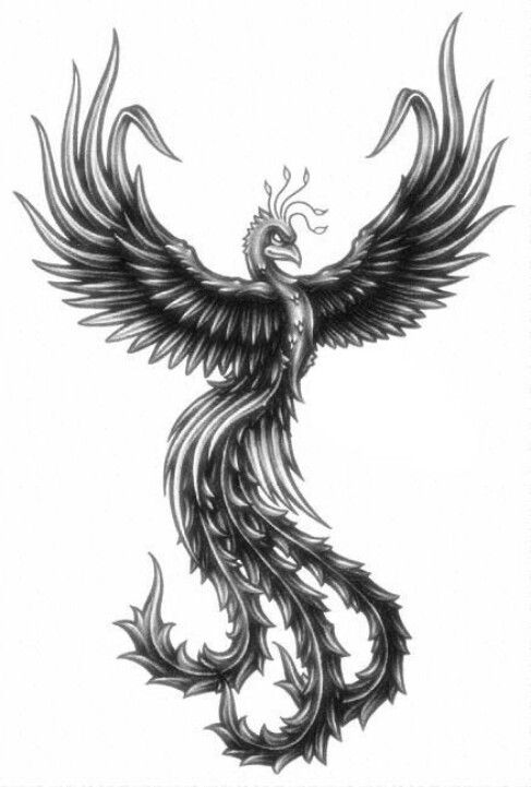 Phoenix Black And White Tattoos Pinterest Tattoos Phoenix