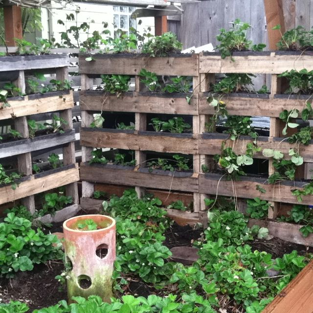 Reclaiming pallets to make vertical strawberry bed home for How to build a vertical pallet garden
