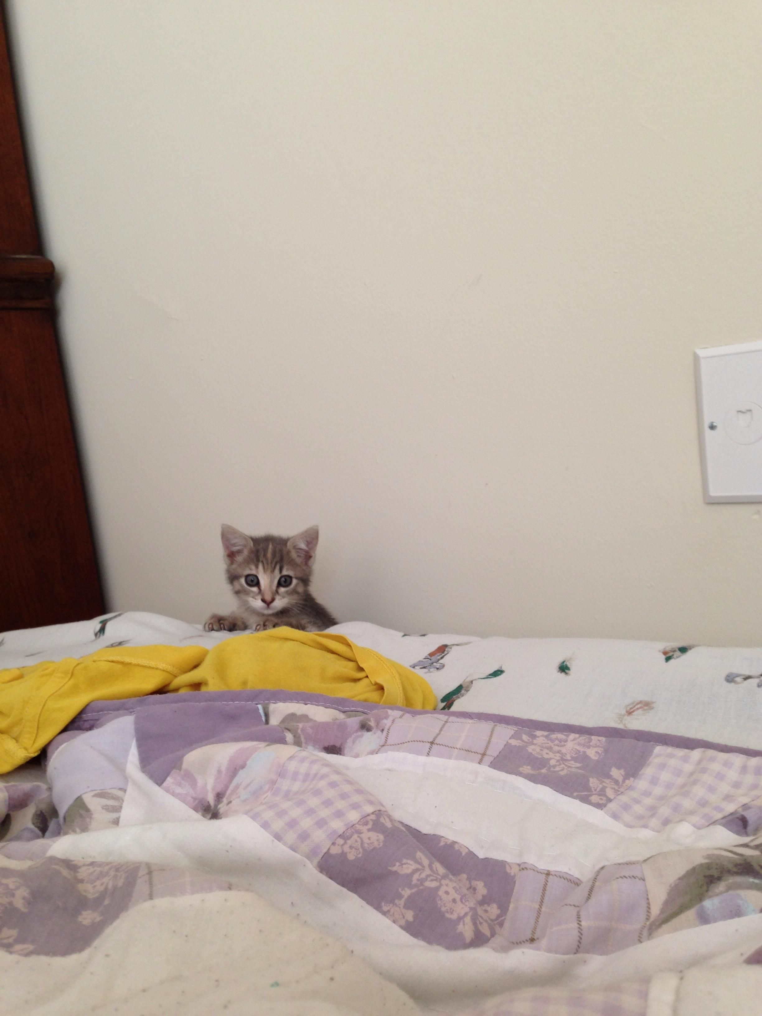 My New Kitten Spent Most Of Her First Day Home Hiding Behind The Dresser Or Bed But Would Occasionally Peek Out Kitten Cute Cats Kittens Cutest