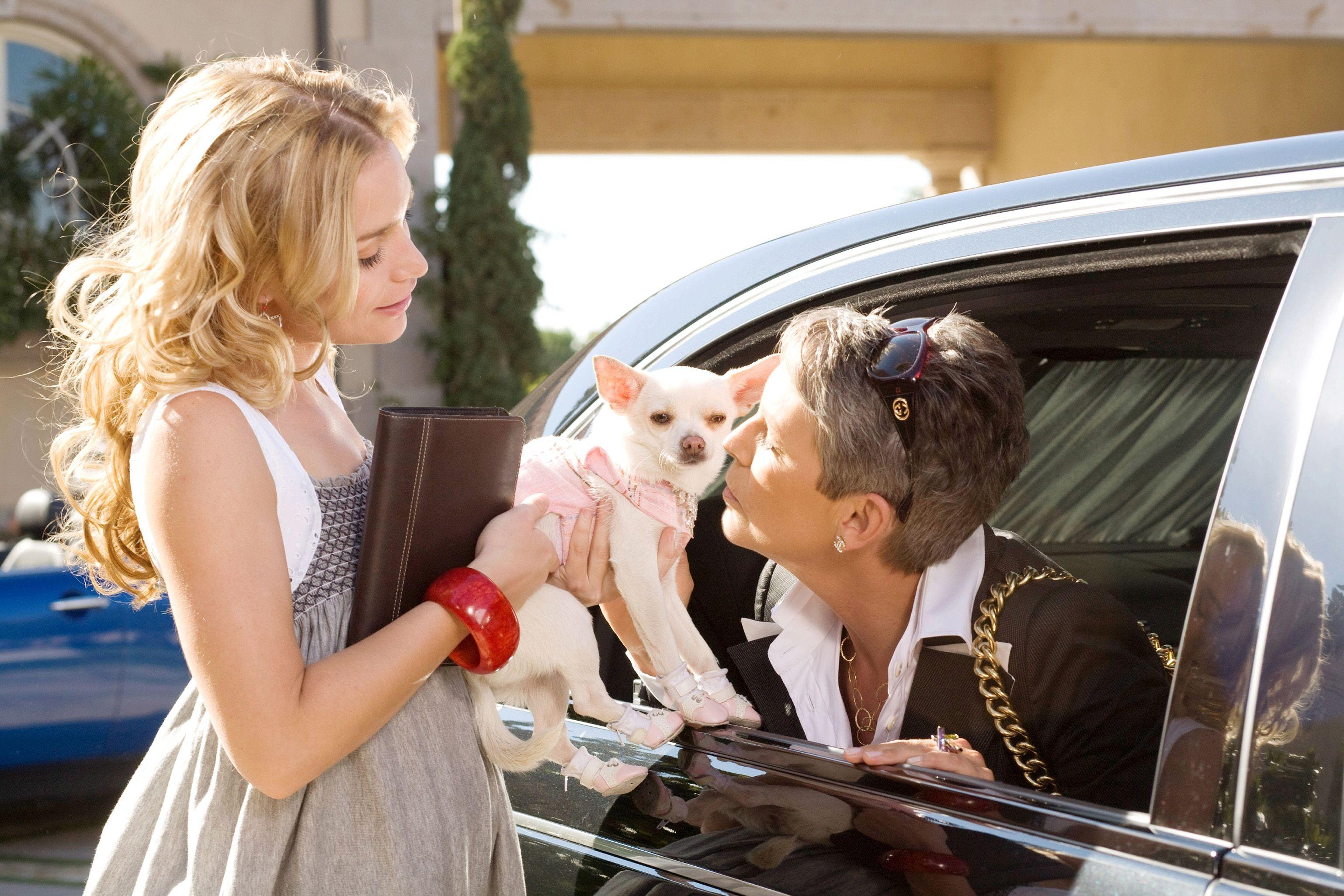 Behind-the-Scenes: Chloe\'s Beverly Hills Chihuahua Wardrobe