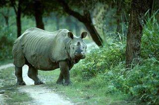 Unexplored Paradise - Assam!!